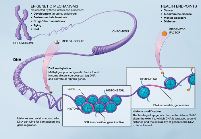 NIH, Epigenetic Mechanisms